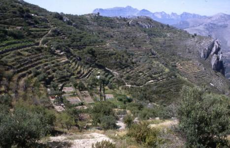 terrasses_tarbena